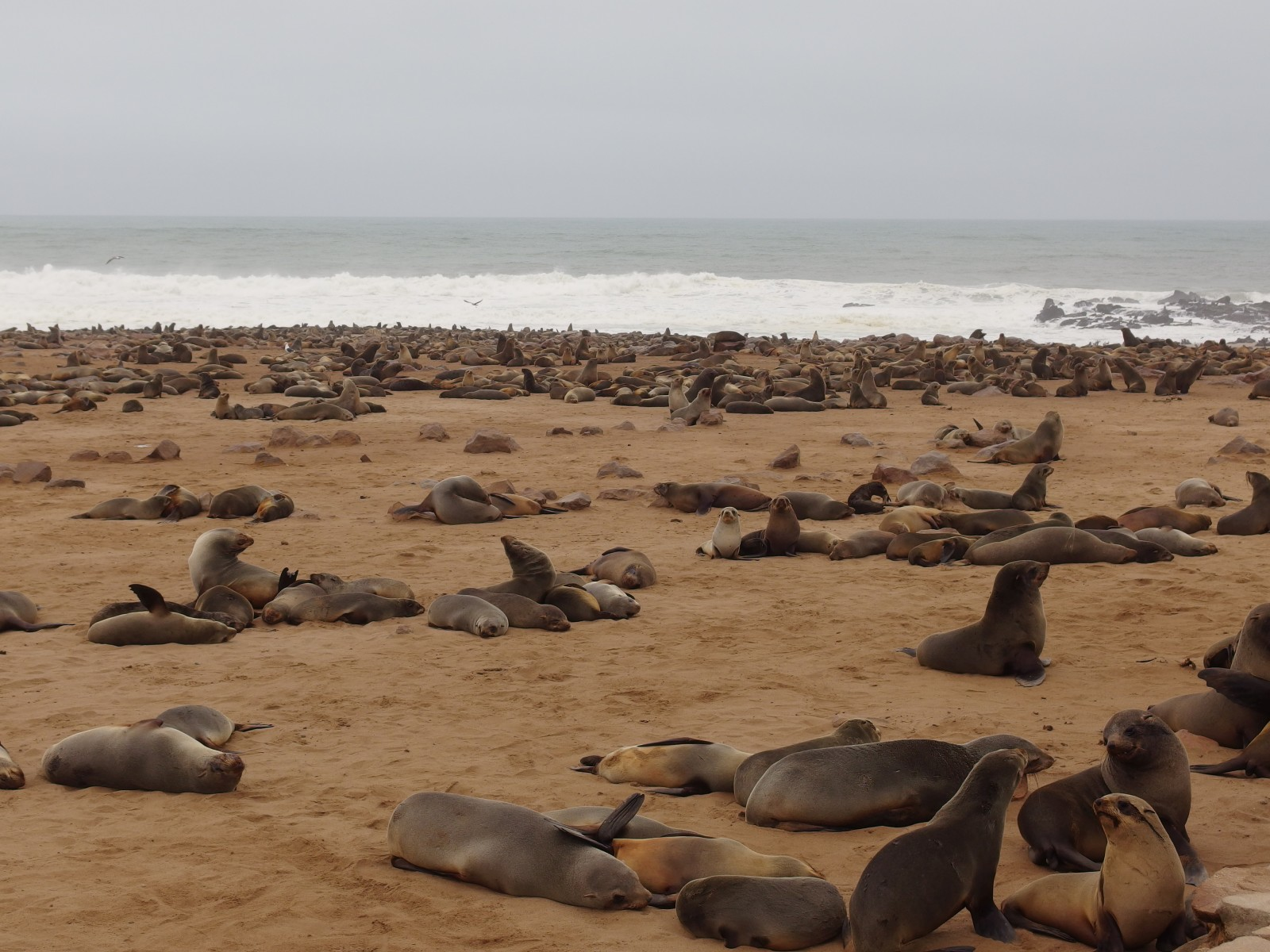 Robbenkolonie am Cape Cross