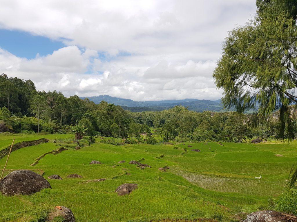 Tana Toraja