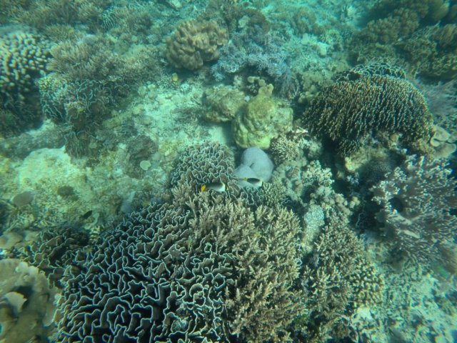Coral Eye
